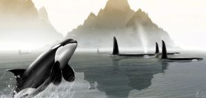 Orcas At Sunrise by lifeformgraphics
