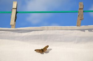 Butterfly on a sheet by MikeyHramiak