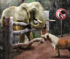 Do Not Feed the Pachyderms by Bela-designs