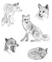 Foxes by s-traszydlo
