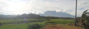 Ricefields at noon by altanimator