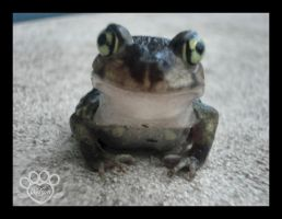 Happy Frog 1 by devildoll
