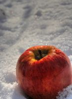 Snow-white-apple by blessedchild