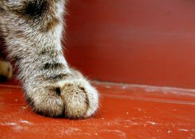 Little Paw by The--Pessimist