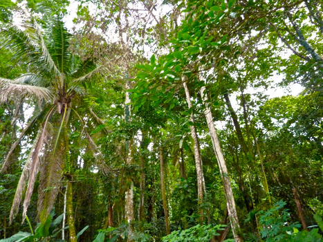 PNG jungle by donsher8