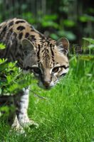 Cute but elusive by Tienna