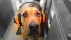 Beats audio for dogs by JayVphotography