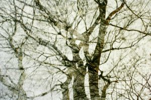 Abstract ::tree:: :2: by dr-snoggle