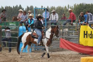 Taupo Rodeo 88 by Sooty-Bunnie
