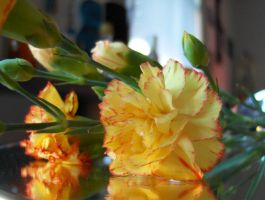 Red Tipped Yellow Carnation by DJCandiDout