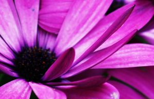 Pink Beautiful Flower 2 by TonistL