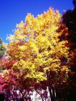 Autumn Tree 1 by lorewith-na-athend