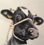 Cow pastel drawing by donnabe