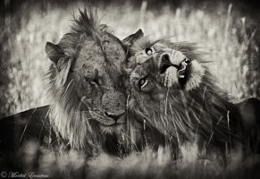 Brotherly Love by MorkelErasmus