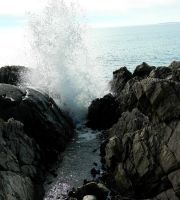 Blowhole, we love you by SlateGray
