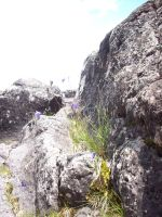 Rocks and Flowers 2 by PlaidRed