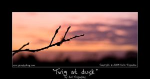 Twig at dusk by koltregaskes