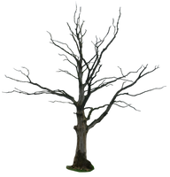 dead tree png by gd08