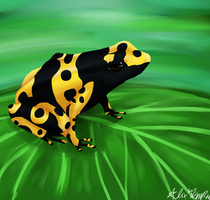 Poison Dart Frog by saltwaterPixels
