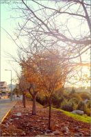 Cold sunny morning by ShlomitMessica