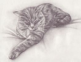 cat drawing by Zillahblack