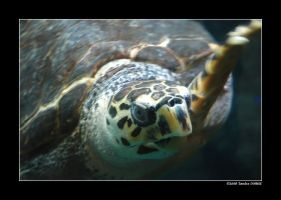 Sea turtle by grugster