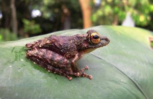 Perfect Froggy Pose by devonette