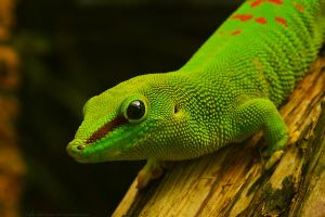 Gecko by 14th-division