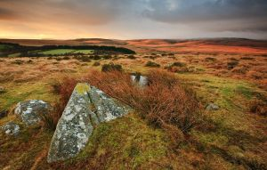 dappled dartmoor by sassaputzin