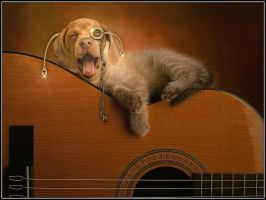Dog and Guitar. by fisher57