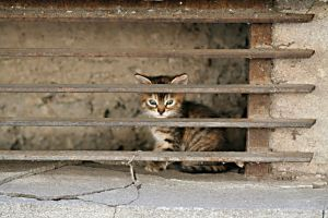 Alone cat by vmcbike