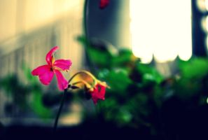 potted plant by qizzeyy