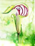 Jack in the Pulpit by LZiggy
