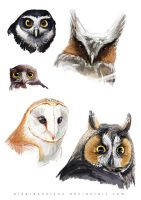 Sketch dump - Owl by AlsaresLynx