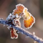 Frozen Leaves 01 by jo1976