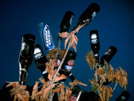 The beer tree by Lombax2007