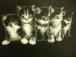Scratchboard Project by SakiRee