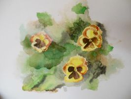 Yellow Pansies by MelissaKateN