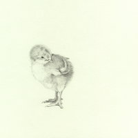 a chick by mollygrue