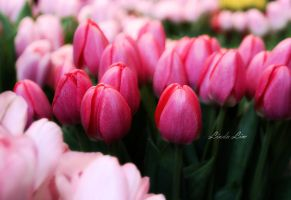 In the Tulip Land by Ziye