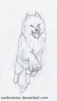 Fierce Leaping Wolf Sketch by SunlessRise