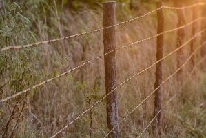 Barbed Wire Sunset by donnasueb