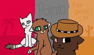 BBB: Three cats by Clouleo