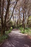 Forest walkway stock by CathleenTarawhiti