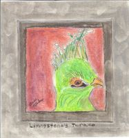 Livingtone's Turaco by MissTakes1
