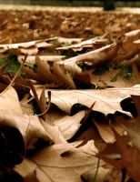 Les Feuilles Mortes by PiccolaStellaOscura