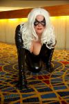 Black Cat 16 by TimeLordmk