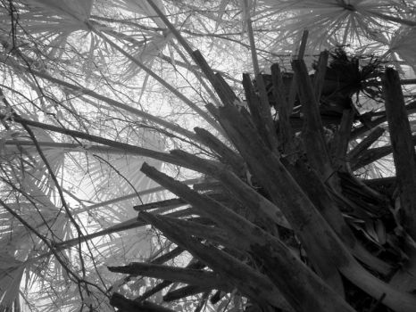 Abstract Palm by dealie
