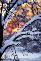 Tree under the weight of snow by xXTheDeviantXx