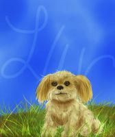 Gizmo 83 by lonesome-wolf-child